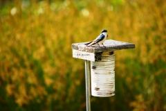Birds28
