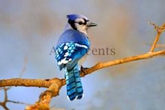 Birds41