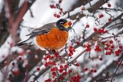 Birds45