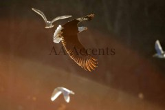 Birds47
