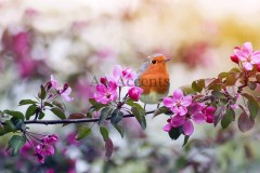 Birds58