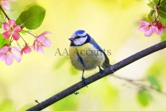 Birds59
