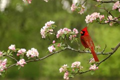 Birds64