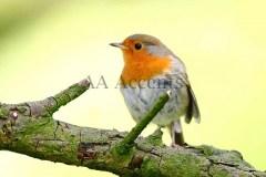 Birds65