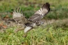 Birds69