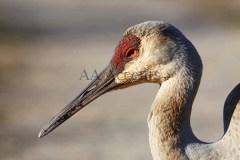 Birds72