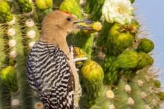 Birds73