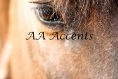 Horses10