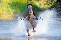 Horses17