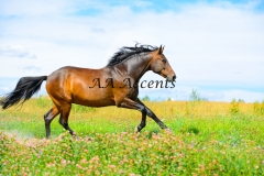 Horses18