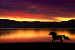 Horses30