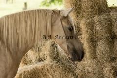Horses32