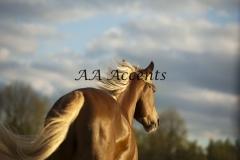 Horses34