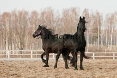 Horses38
