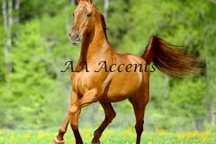 Horses40