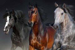 Horses47