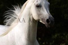 Horses52