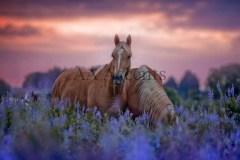 Horses56