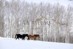 Horses59