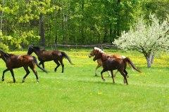 Horses61