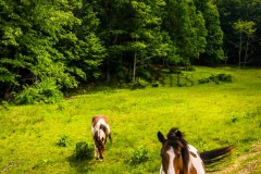 Horses67
