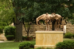 FT. RILEY KS HORSE STATUE (1)15