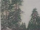 Alpine Highway