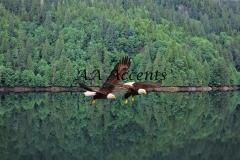 Birds14