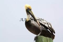 Birds22