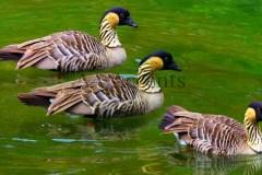 Birds48