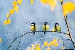 Birds51