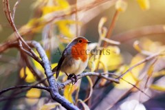 Birds57