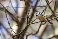 Birds67