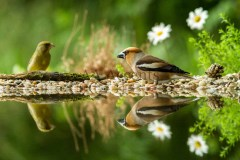 Birds76