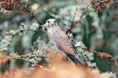 Birds79