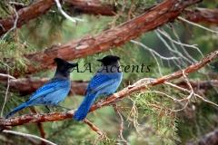 Birds8