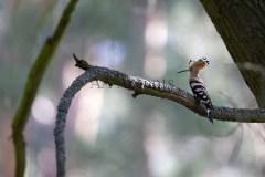 Birds81