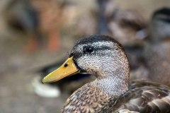 Birds83