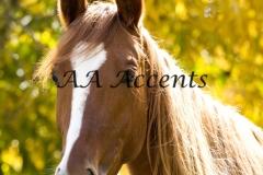 Horses14