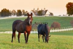 Horses15