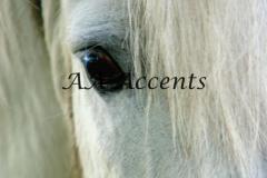 Horses21