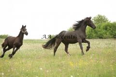 Horses25