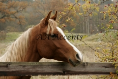 Horses29
