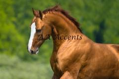 Horses35