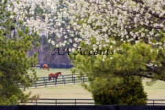 Horses39