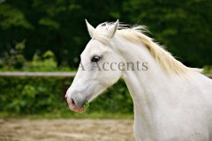 Horses41