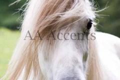 Horses43