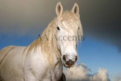 Horses44