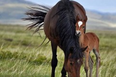 Horses45