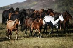 Horses46